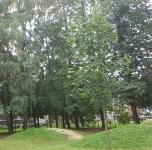 Miškas su kalneliais