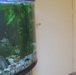 """Prie akvariumo"""
