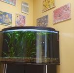 Relaksacija prie akvariumo
